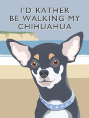 8085-chihuhua-walking