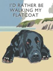 8092-flatcoat-walking