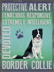 20877-border-collie